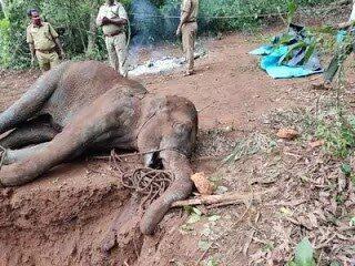elephant died in kerala
